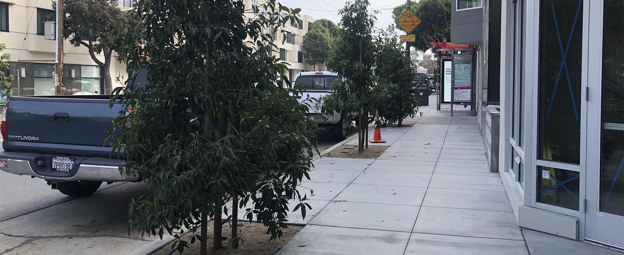 Commercial landscaping, trees planted in walkside for a business in San Francisco/