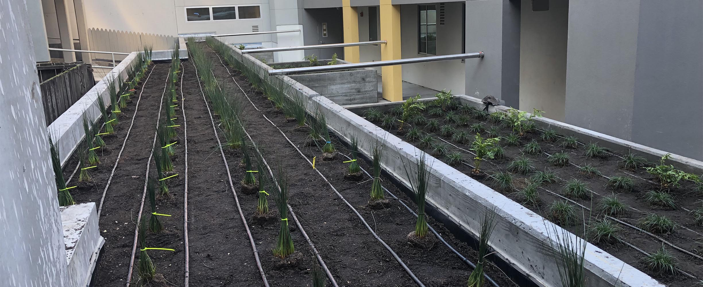Commercial landscaping, plants beds in balconys for a apartment building in San Francisco